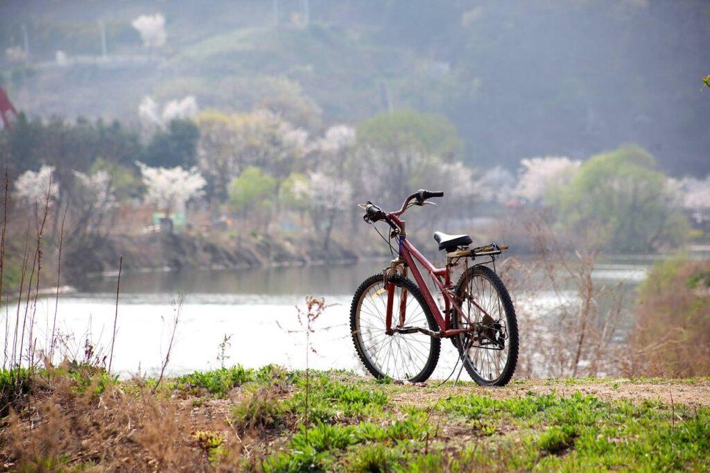 Festa della Toscana, a Pisa in bici sulle vie d'acqua
