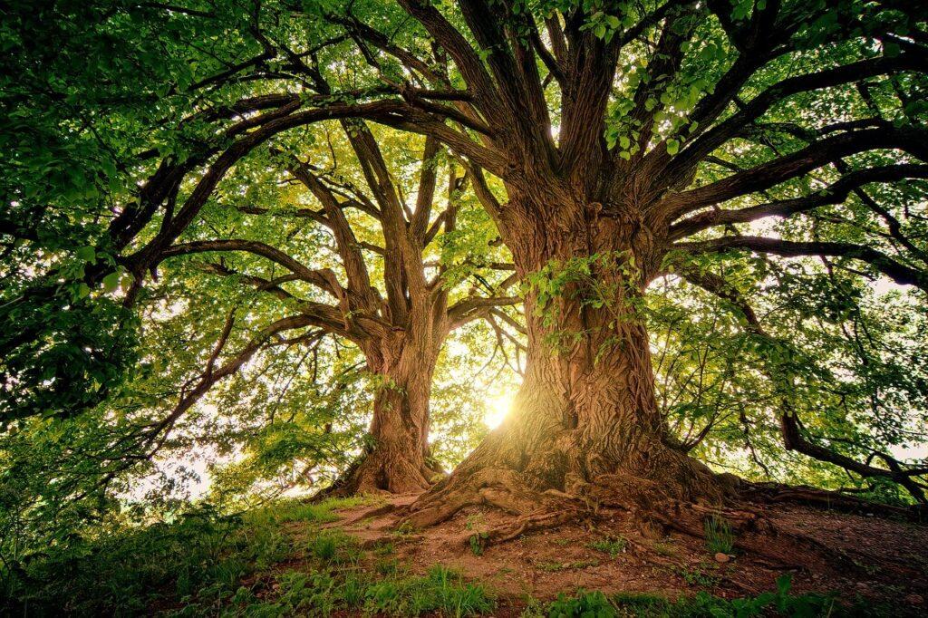 """Ambiente, ecco il convegno """"Piantare alberi, pensare al futuro"""""""